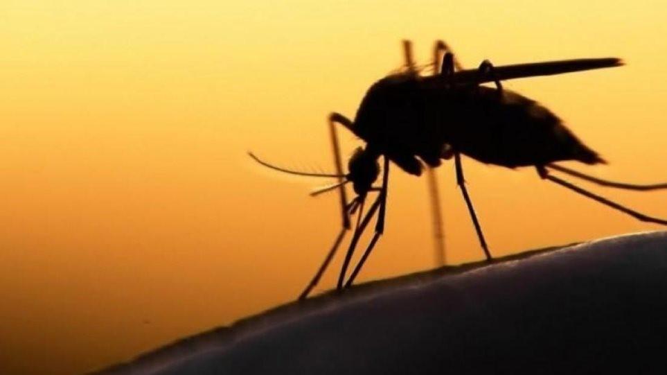 Προφυλαχθείτε από τα κουνούπια και τον ιό του Δυτικού Νείλου – Οδηγίες