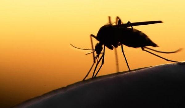 Συναγερμός από την επανεμφάνιση του ιού του Δυτικού Νείλου. Προσοχή!