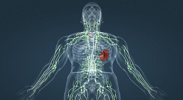 Λέμφωμα: Πρόληψη – Πώς γίνεται η αποτοξίνωση στους λεμφαδένες